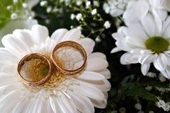 Hochzeitsringe auf weißem Gänseblümchen Stockfoto