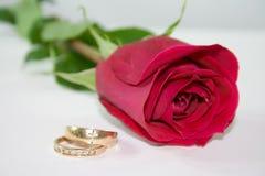 Hochzeitsringe nahe bei einem recht Roten stiegen. Stockfotos
