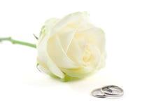 Hochzeitsringe und eine Rose Stockfoto