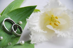 Hochzeitsringe und -tulpe lizenzfreies stockfoto
