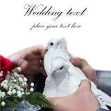Hochzeitstauben Lizenzfreie Stockfotos