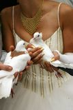 Hochzeitstauben   Stockbild