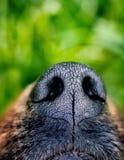 Hocico del perro imagen de archivo libre de regalías