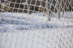 Hockey netting Stock Image