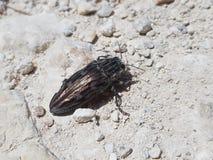 Hockey shinny y x28 bonitos; no so& x29; peque?o insecto que vuela de Mallorca imágenes de archivo libres de regalías