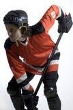 hocky вертикаль игрока стоковая фотография