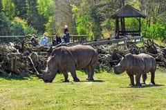 Hodenhagen, Alemanha - 30 de abril de 2017: O rinoceronte e os povos no Serengeti estacionam, Alemanha Imagem de Stock Royalty Free