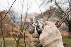 Hoe te behoorlijk om voor bomen te geven en de takken met tuinschaar in orde te maken royalty-vrije stock fotografie