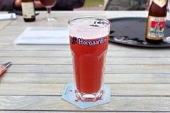 HOEGAARDEN BELGIEN - SEPTEMBER 04, 2014: Exponeringsglas av ölet för Hoegaarden rosfrukt Royaltyfri Fotografi
