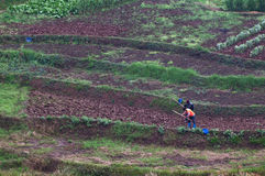 Hoeing farmers. Two farmers were hoeing in their fields Royalty Free Stock Photo