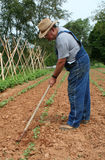 Hoeing the Garden. Local hard-working farmer continues his regular maintenance of tending his garden, while enjoying a cigar Royalty Free Stock Image