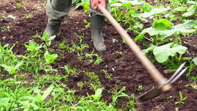 Hoeing soil. Stock Photography