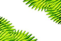 Hoek die van palmbladen wordt gemaakt royalty-vrije stock fotografie