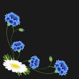 Hoek met blauwe korenbloemen en madeliefje op een zwarte achtergrond royalty-vrije illustratie