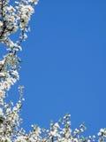 Hoek van bloemen Royalty-vrije Stock Afbeeldingen