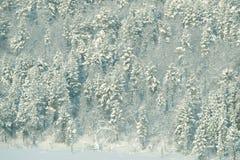Hoek van een polair snow-covered bosgebied van Moermansk, Rusland royalty-vrije stock afbeelding