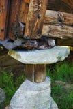 Hoek van het huis, die door stenen en logboeken wordt gesteund Royalty-vrije Stock Afbeeldingen