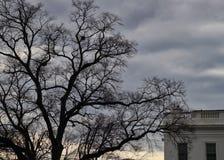 Hoek van het Witte Huis op een sombere dag met een onvruchtbare boom in wintertijd Royalty-vrije Stock Foto