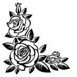 Hoek van rozen stock illustratie