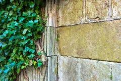 Hoek van tuinmuur met exemplaarruimte royalty-vrije stock fotografie