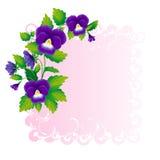 Hoek van viooltjes Royalty-vrije Stock Afbeelding