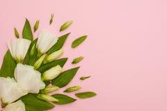 Hoeksamenstelling van witte eustomabloemen op roze achtergrond Stock Afbeeldingen