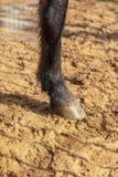 Hoeven van een dier op zand in een dierentuin stock afbeeldingen