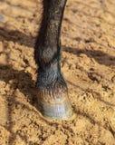 Hoeven van een dier op zand in een dierentuin royalty-vrije stock foto's