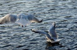 Hoffnung auf dem Meer Stockfotos