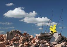 Hoffnung auf Ruinen Stockfotografie