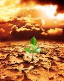 Hoffnung des neuen Lebens in einer zerstörten Umwelt Stockfotografie