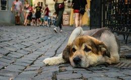 Hoffnungsloser obdachloser Hund und gleichgültige Fußgänger Stockfotos