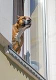 Hoffungs krieg & το παράθυρό του Στοκ φωτογραφία με δικαίωμα ελεύθερης χρήσης