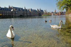 The Hofvijver lake with swans swimming and the Binnenhof 13 century gothic castle in the background. The Hague, Netherlands stock photography