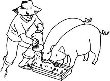 Hog Feeding Stock Images