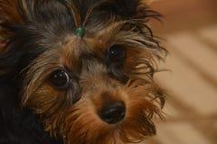 hogar agradable un perro Fotos de archivo