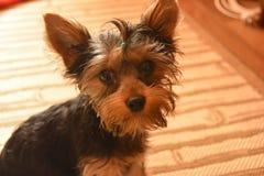 hogar agradable un perro Fotos de archivo libres de regalías