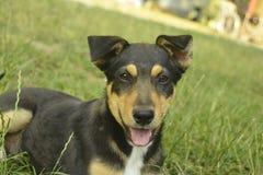 hogar agradable un perro Foto de archivo libre de regalías