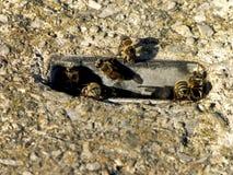 Hogar 1 de la abeja Fotos de archivo libres de regalías
