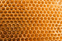 Hogar de la abeja del peine de la miel Imagen de archivo