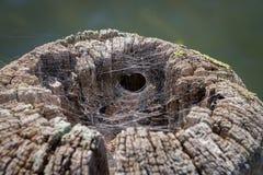 Hogar de la araña Foto de archivo