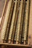 Hogar de la célula de la abeja de reina con la jalea real Imagen de archivo libre de regalías