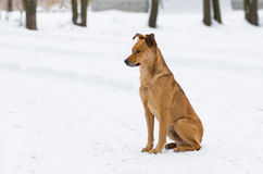 Hogar de la vuelta del amo del perro mezclado de la raza que espera para Foto de archivo