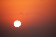 Hogar del pájaro Fotografía de archivo