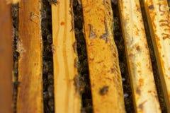 Hogar del ` s de la abeja en la colmena. Imagenes de archivo