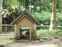 Hogar dulce casero de conejillos de Indias fotografía de archivo