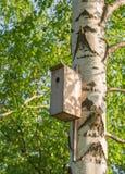 Hogar dulce Una opinión del primer de una pajarera en un árbol de abedul en verano Imagen de archivo libre de regalías