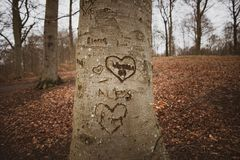 Hogar en un árbol foto de archivo