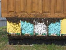 Hogar para las abejas Fotos de archivo libres de regalías