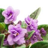Hogar violeta Fotos de archivo libres de regalías